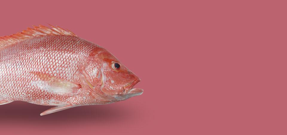 Intan Seafood Banner Dumersal Fish