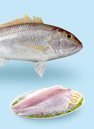 Fish Baramundi Natural
